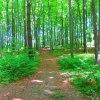 Las w maju