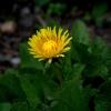 Kwiaty majowe-Nikon1s1