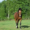 koń jaki jest każdy widzi<br /> :-)  :: Dla ciebie Aniu bo wiem ż<br />e lubisz :-)  Mam nadziej<br />ę że&#039;Fotografia&#039<br />;nie ma mi zazłe że