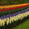 Wszytkie kwiaty Holandii.<br />..dla naszych ukochanych <br />mam