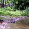 Kaczka na Pogorii :: Kaczka stojąca na brzegu <br />jeziora Pogoria III w Dąb<br />rowie Górniczej