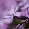 Skromny kwiatuszek, w pod<br />ziękowaniu za cudną nieza<br />pominajkę, pozdrawiam ser<br />decznie.