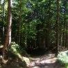 w tajemniczym lesie