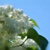 za piękną dedykację ...Śl<br />icznie dziękuję Gosiu ...<br />:) ::                          <br />                         <br />                   Zapach<br /> , którego w maju nie mo
