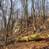 Rezerwat Sokole Góry :: 14.03.2017. Leśny rezerwat przyrody Sokole Góry w powiecie częstochowskim.   Poniżej widok na wznies