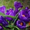 Wiosna w moim ogrodzie...<br />..