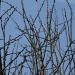 szukałam zwiastunów wiosny, znalazłam kotki na drzewie i kotki wygrzewające się w ciepłych promieniach słońca .....