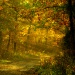 Leśny zaułek dla Ciebie Aniu z wieczornymi pozdrowieniami
