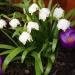Wiosenny obrazek na powitanie dla Was