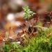 leśne drobiażdżki