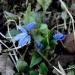 Niechaj wiosna na trwałe zagości w naszych sercach ... /z netu/