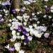Wiosenny dywan dla Was