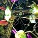 Skoro tak lubisz podwodny świat- bardzo proszę:)))