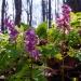 Wiosną w lesie ::