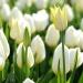 Czasem wystarczy położyć się w kwiatach ;)