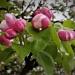 Wiosenne powitanie ode mnie dla Was na dziś:)Wardruna - Völuspá