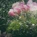 Pozdrowienia z Krainy Deszczowców:)Kwiaty w deszczu, zapłakana wiosna:)Ciągle pada od 9.30 rano:( To nie jest fajne:( Czerwone Gitary Ciągle Pada