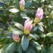 Wiosenne nadzieje....:)