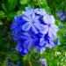 ,,Pięknego weekendu mili <br />Flo...pozdrawiam znad mor<br />za i z mojego ogródka;))) ::