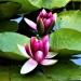 Spacerek w Botaniku ,,,pozdrówki  flogusie ,,,,
